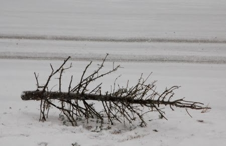 Christmas tree stripped